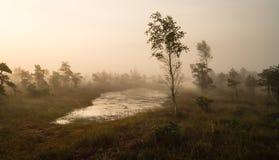 Nebelmorgen auf der Natur Stockfotos