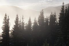Nebeln Sie auf dem Berg ein Lizenzfreie Stockfotografie