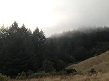 Nebeln Sie auf dem Berg ein USA Lizenzfreie Stockbilder