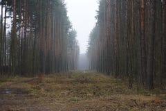 Nebeln Sie auf einer Lichtung im Wald, Kiefer auf beiden Seiten von der Straße ein Lizenzfreie Stockfotos