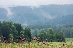 Nebeln Sie das Steigen über die Reihen des Koniferenwaldes ein Lizenzfreies Stockfoto