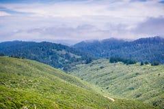 Nebeln Sie die Abdeckung der fruchtbaren Hügel und der Täler des Montara-Berg-McNee-Ranch-Nationalparks, Kalifornien ein stockbilder