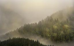 Nebeln Sie die Abdeckung der Gebirgswälder mit tiefer Wolke in Juneau Alaska für Nebellandschaft ein Stockfotografie