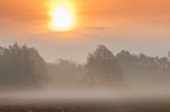 Nebeln Sie früh morgens in einem Eichenwald, Spätherbst ein Stockfoto