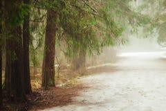 Nebeln Sie im Wald, die Tannenbaumniederlassungen ein, die über der Straße hängen Lizenzfreie Stockbilder