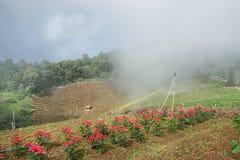 Nebeln Sie morgens an Montag-Cham, Thailand ein, immergrüner Wald des Überflusses und nebelig lizenzfreie stockbilder