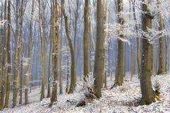 Nebeln Sie zwischen Bäumen in einem schönen Wald mit eingefroren ein Stockbild