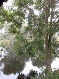 Neben einem Fluss Stockbilder