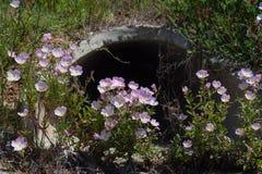 Nebeneinanderstellung von Wildflowers und von konkretem Abzugskanal Lizenzfreie Stockfotografie