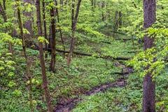 Nebenfluss in den Sumpfgebieten während des Frühlinges lizenzfreie stockfotografie
