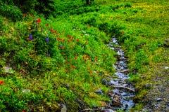Nebenfluss, der durch die wilden Blumen auf Tod Mountain läuft Lizenzfreies Stockfoto