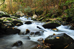 Nebenfluss, der durch rauchiger Gebirgsnationalpark läuft Stockfotos