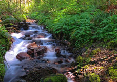 Nebenfluss, der hinunter Abhang nahe Multnomah-Fällen fließt Lizenzfreie Stockfotos