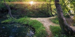 Nebenfluss in der Waldnaturzusammensetzung Lizenzfreies Stockfoto