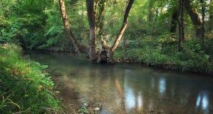 Nebenfluss in der Waldnaturzusammensetzung Stockbild