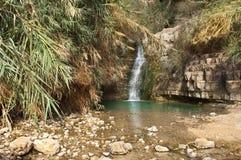 Nebenfluss Ein Gedi, Totes Meer, Israel Stockfotografie
