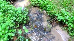 Nebenfluss in einem deutschen Wald stock video