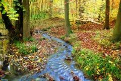 Nebenfluss in einem fabelhaften herbstlichen Holz Stockfotos