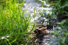 Nebenfluss in einem Frühlingswald Stockbild