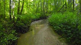 Nebenfluss in einem Sommerwald stock video