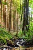 Nebenfluss in einem Wald Lizenzfreies Stockfoto