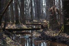 Nebenfluss in einem Wald Stockbilder