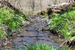 Nebenfluss in einem Wald Lizenzfreies Stockbild