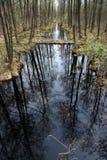 Nebenfluss in einem Wald Lizenzfreie Stockfotos