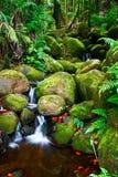 Nebenfluss im Dschungel von Hawaii Lizenzfreies Stockbild
