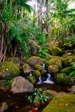 Nebenfluss im Dschungel von Hawaii Stockbild