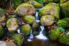 Nebenfluss im Dschungel von Hawaii Lizenzfreie Stockfotos
