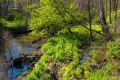 Nebenfluss im Frühjahr Lizenzfreie Stockfotos