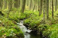 Nebenfluss im Herbstgrünwald Stockbilder