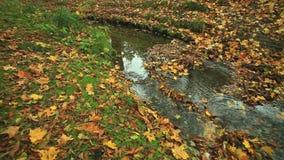 Nebenfluss im Herbstwald volles HD mit motorisiertem Schieber 1080p stock video footage