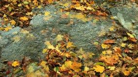 Nebenfluss im Herbstwald volles HD mit motorisiertem Schieber 1080p stock footage