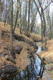 Nebenfluss im Holz stockbild