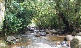 Nebenfluss im Iguazu-Dschungel lizenzfreies stockbild