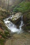 Nebenfluss im Wald Stockbild