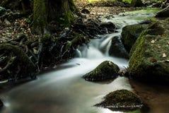 Nebenfluss im Wald Stockfotografie