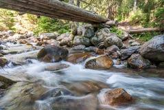 Nebenfluss im Wald Lizenzfreie Stockbilder