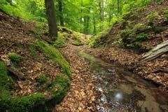 Nebenfluss im Wald Lizenzfreie Stockfotografie