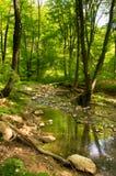 Nebenfluss im Wald im Frühjahr Stockfoto