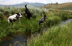 Nebenfluss Jumpin Hunde Lizenzfreies Stockbild