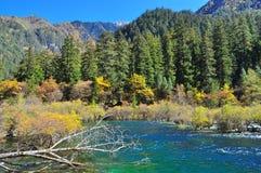 Nebenfluss mit bunten Herbstpflanzen und Bäumen Lizenzfreie Stockbilder