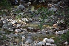 Nebenfluss mit Felsen Stockfotografie