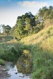 Nebenfluss mit reflektierten Bäumen und wilden Blumen lizenzfreie stockfotos