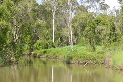 Nebenfluss in Ost-Australien Lizenzfreie Stockfotos