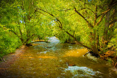 Nebenfluss in Süd-Mesa Trailhead, Colorado Lizenzfreie Stockbilder