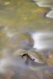 Nebenfluss und Felsen Stockfotografie