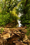 Nebenfluss und grüner Wald Lizenzfreies Stockbild